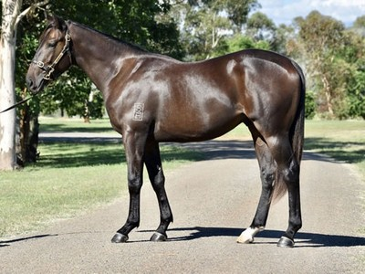 Valiant Stud Offers Single Stunning Colt for Inglis Easter