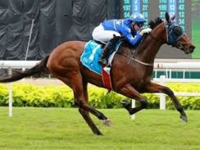 Boerhan Wins Sole Thoroughbred Feature In Abu Dhabi Image 2